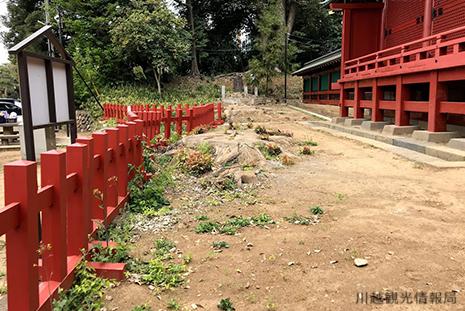 川越 三芳野神社 大楠跡